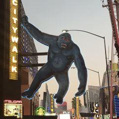 Universal Studios Hollywood User Photo