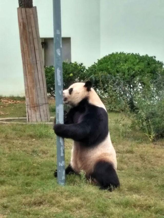 Qingdao Zoo