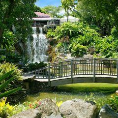 圖爾植物園用戶圖片