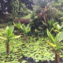 Seychelles National Botanical Gardens User Photo