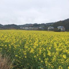Pingpan Village Rape Flower User Photo