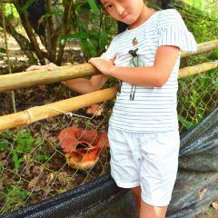Tambunan Rafflesia Reserve User Photo