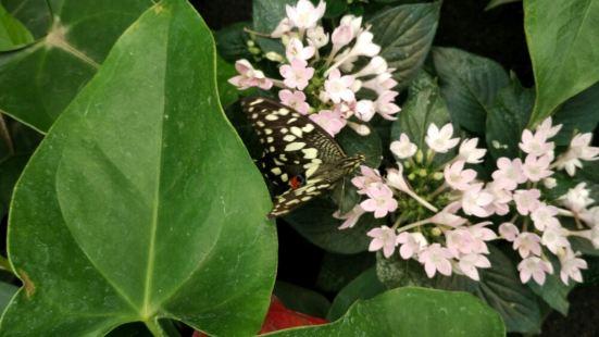 蝴蝶博物館