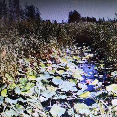 Maying Wetland User Photo