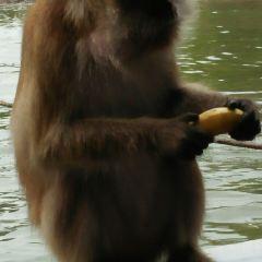 Mangrove Ecological Reserve User Photo