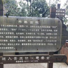 Nangongshan National Forest Park User Photo
