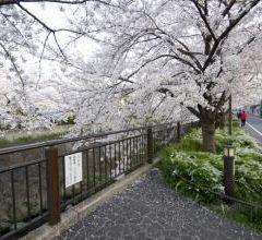 Yamazaki River User Photo