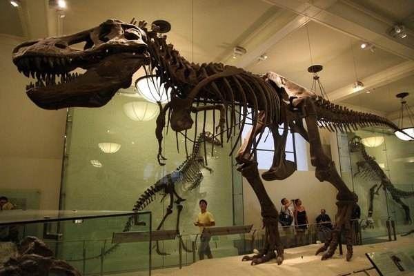 美國自然歷史博物館