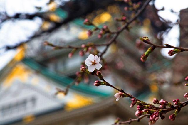 大阪:日本的廚房,關西的都市物語