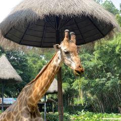 長隆旅遊度假區張用戶圖片