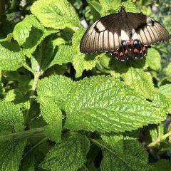 邦德堡植物園用戶圖片