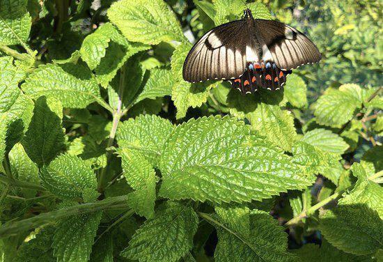 Bribie Island Butterfly House
