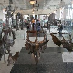 Museum of Natural History (Halifax) User Photo