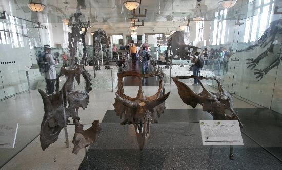 Museum of Natural History (Halifax)