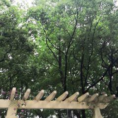 峨碌公園用戶圖片