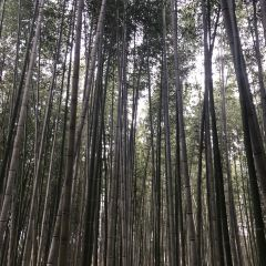 嵐山用戶圖片