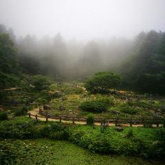 Rokko Alpine Garden User Photo