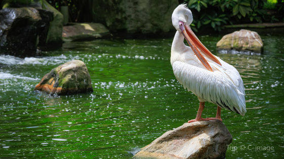KL Bird Park Admission Ticket With One Way Transfer