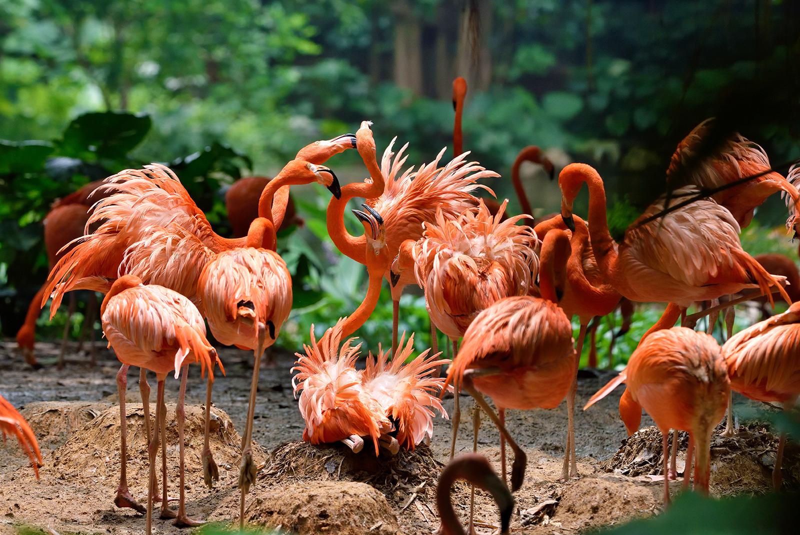 15% Off   Guangzhou Chimelong Safari Park Ticket