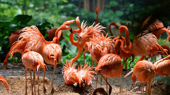 15% Off | Guangzhou Chimelong Safari Park Ticket