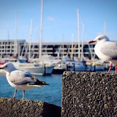 Wellington Waterfront User Photo