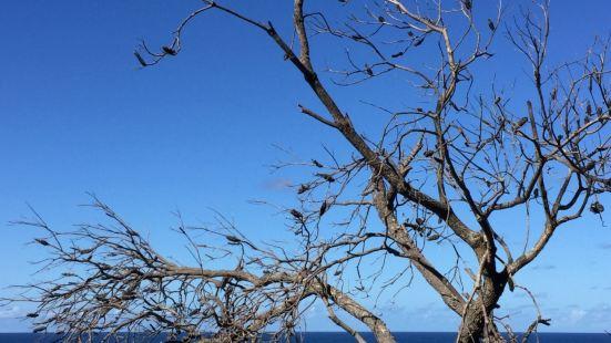 选择的是靠海的步道,海景很美,火鸡常见,可是没看到考拉和袋鼠