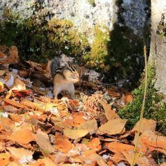 花崗岩石林國家地質公園用戶圖片