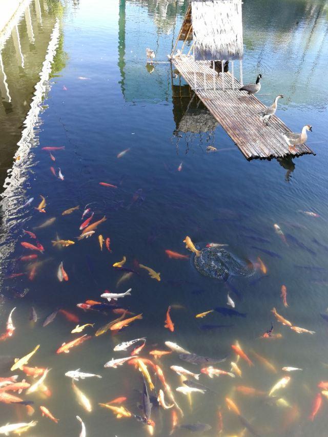 황금강 리조트