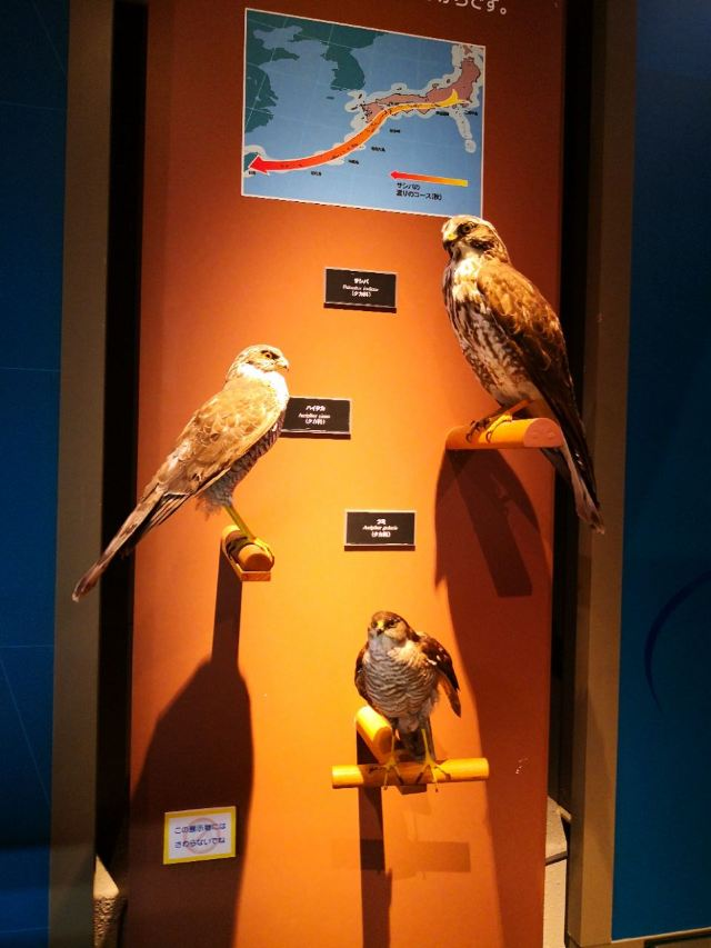 鹿兒島縣立博物館