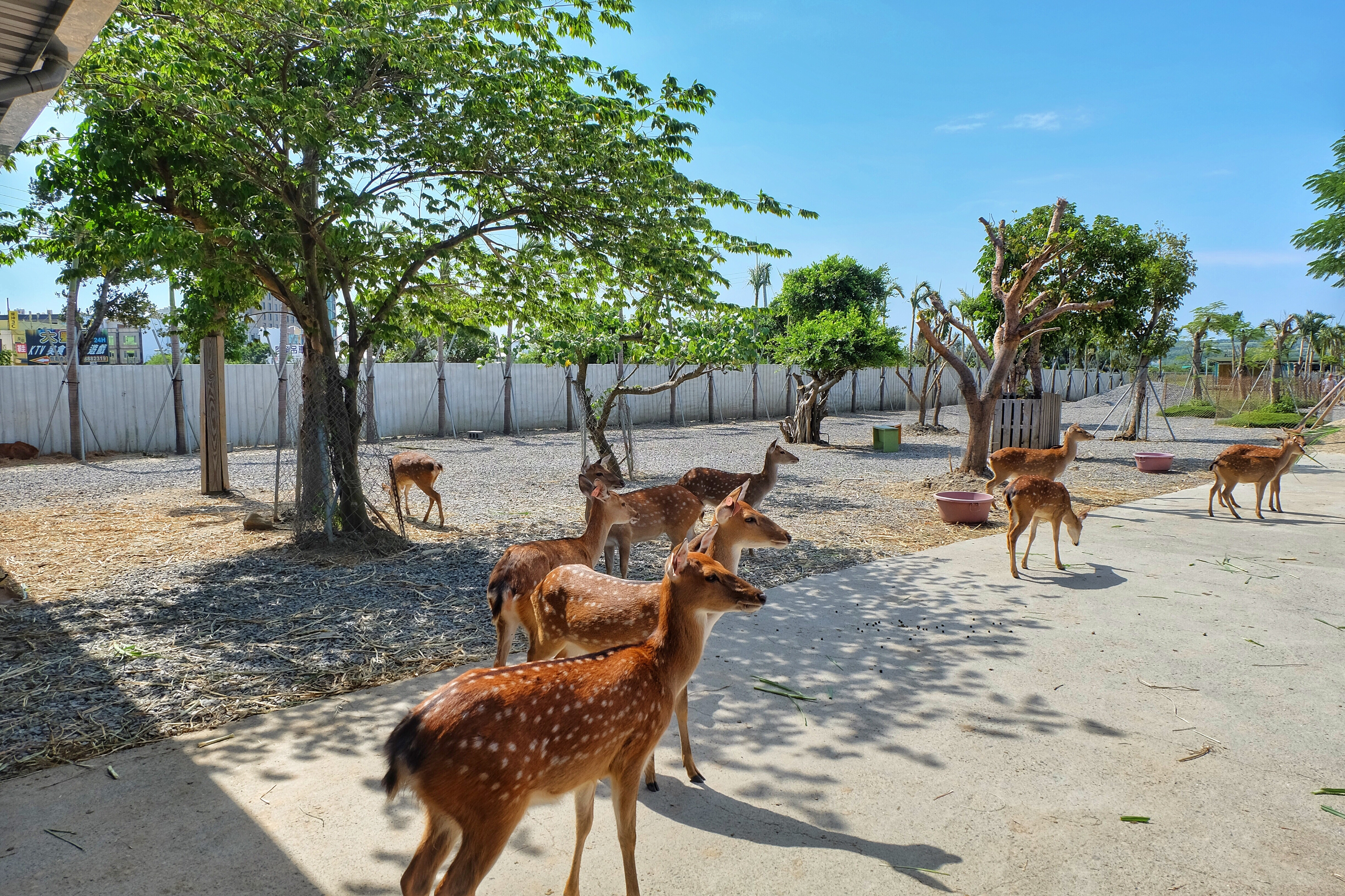 Paradise of Deer Admission Ticket