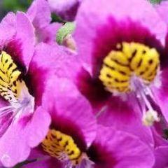 愛倫溫室花園用戶圖片