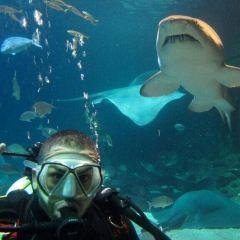 Manly Sea Life sanctuary User Photo