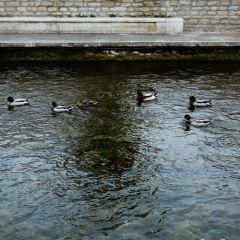 索爾格河畔利勒用戶圖片