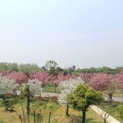 Sakura Park User Photo