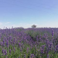 Vanilla Bay Lavender Theme Park User Photo