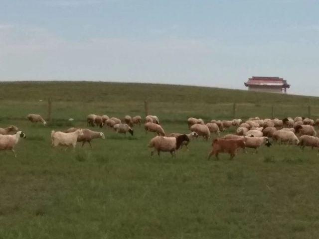 格根塔拉草原