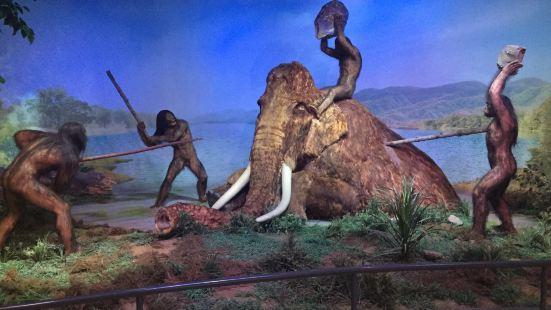 泥河灣博物館