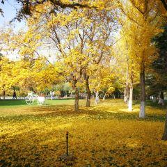 金城公園用戶圖片