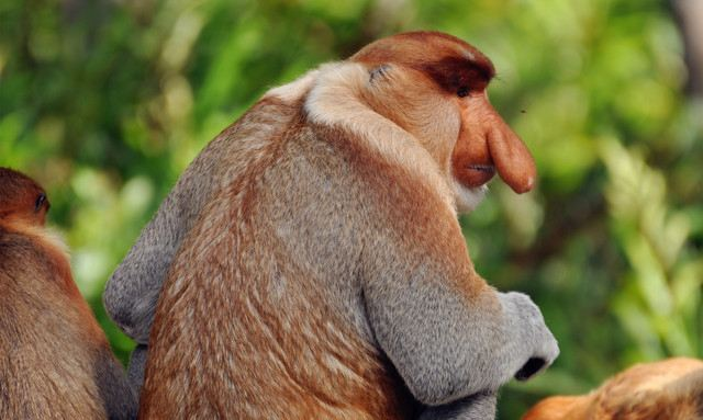 7 Most Popular Natural Attractions for Having Close Contact with Animals in Malaysia Fully Disclosed!