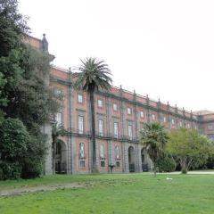 Bosco di Capodimonte User Photo