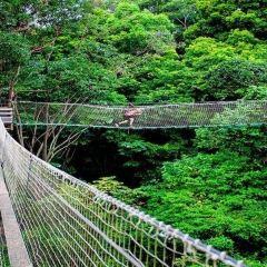 Tamborine Rainforest Skywalk User Photo