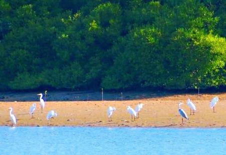 三亞河鳥類自然保護區