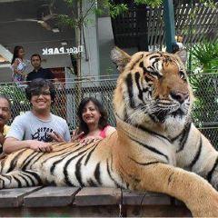 Tiger Park Pattaya User Photo