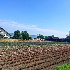 Furano-shi User Photo