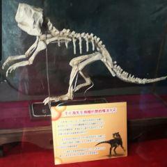 吉林省自然博物館用戶圖片