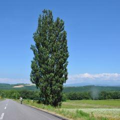 ケンとメリーの木のユーザー投稿写真
