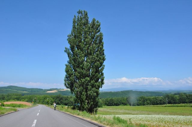Tree of Ken and Mary