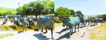 Dallas Cattle Drive Sculptures