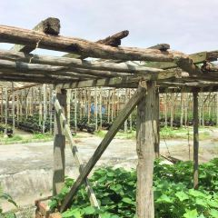 Oh Chin Huat Hydroponic Farms User Photo