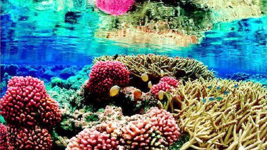 希克杜沃海洋公園